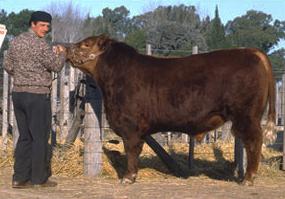 Alfredo Errazu con CSM 6 Radamés