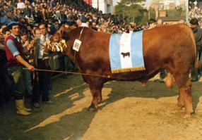 CSM 334 Yeroviá Bicampeón Angus Palermo 89/90