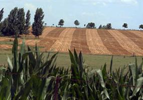 Suelo agrícola