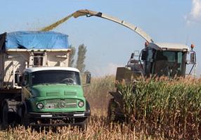 Picando maíz para silo